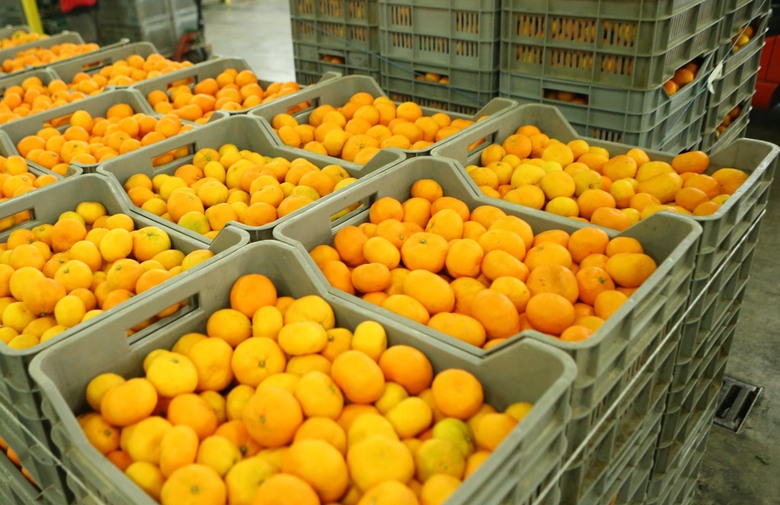 Drenovci neće besplatne mandarine jer ih nema tko podijeliti ljudima?!