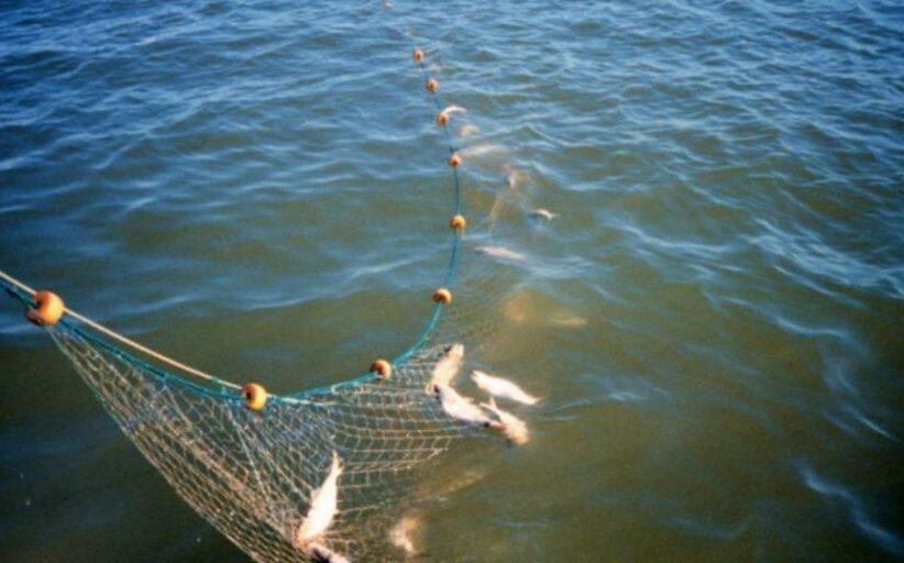 Nezakoniti ribolov mrežama na Savi