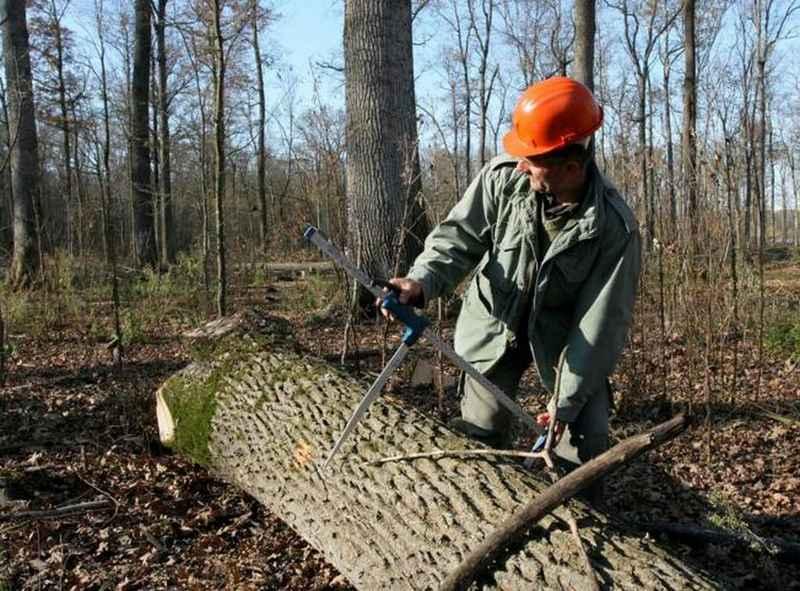 Uprava šuma Vinkovci u 2020. ostvarila dobit veću od 60 mil. kuna